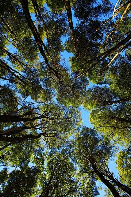 Cajon Del Azul Forest. Rio Negro. Patagonia. Argentina.