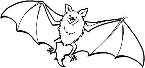 Dibujos De Murcielagos Para Colorear Murcielago Dibujo Paginas Para Colorear Murcielagos