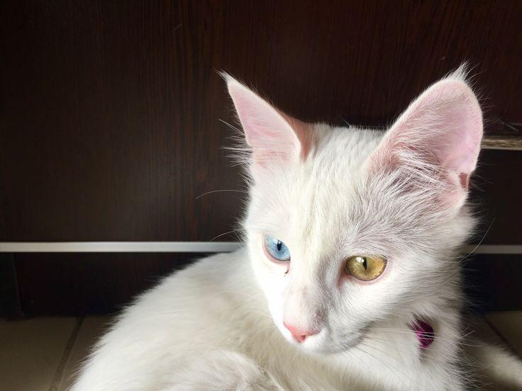 Mavi yeşil gözler