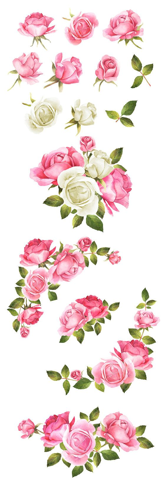 White and pink roses watercolor illustration clip art. This bundle consists of 1…