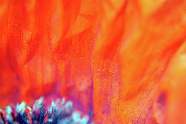 Orange Fire Photograph by Marfffa Art