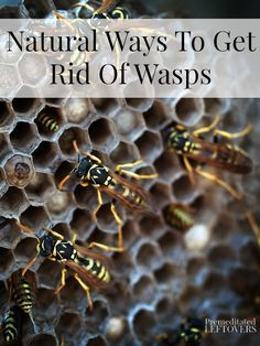Natural Ways To Get Rid Of Wasps - Here are some ways to deter wasps from making nests near your house without resorting to harmful chemicals.