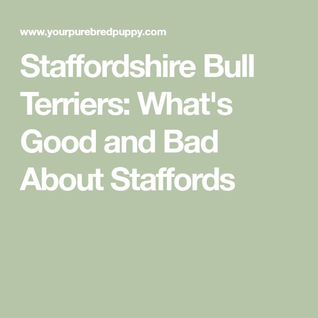 Staffordshire Bull Terriers: What's Good and Bad About Staffords