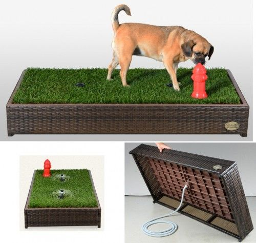 "A grass-filled ""litter box"" for your dog"