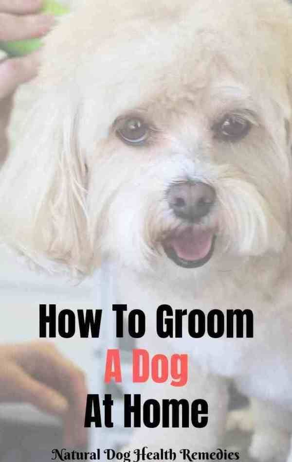 Dog Grooming Learn How To Groom A Dog At Home Diy Dog Grooming Dog Grooming In 2020 Dog Grooming Diy Dog Stuff Puppy Grooming