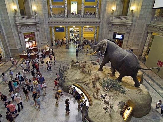 The Natural History Museum in NYC is a must see for families. www.bbggadv.com