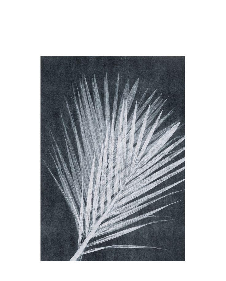 Postkarte Palm dark grey