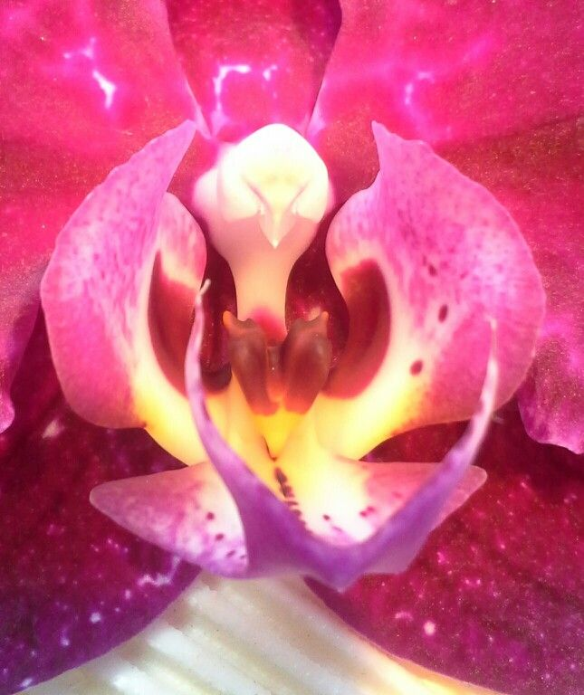 Close-up orchid
