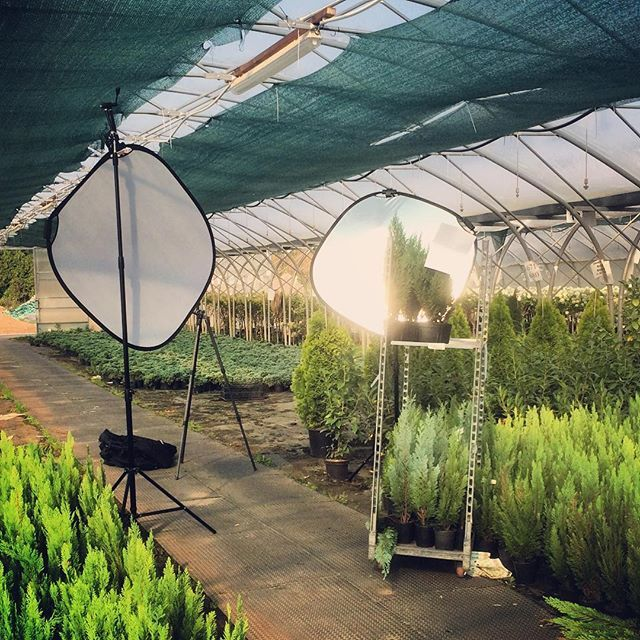 Bouncing in the plant house... #profoto #pflanzmich #plants #green #sunny #nature #thuja #behindthescenes #modelinthemaking #Nikon #garden #gizo #bounce