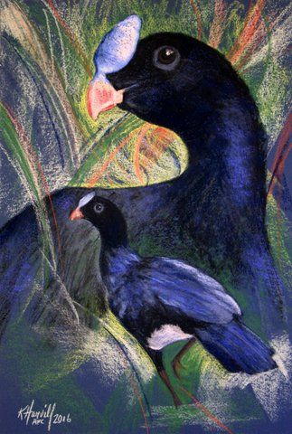Sira Curassow, critically endangered bird. Art by Kitty Harvill c. 2016 | MimsHouse.com