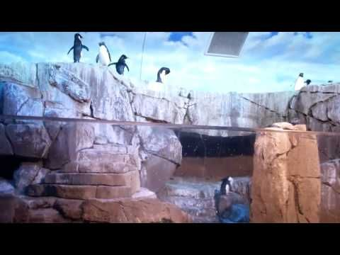 penguins at the louisville zoo