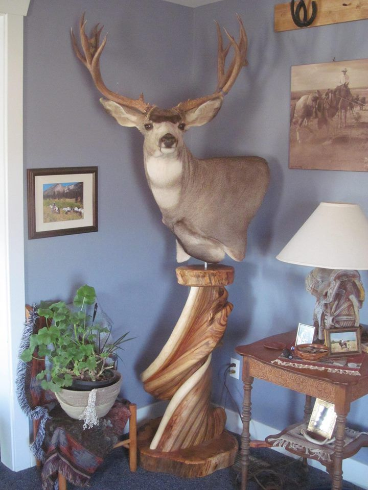 237 Best Images About Taxidermy On Pinterest Wall Mount