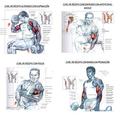 Biceps Exercise Chart | Search Results | Calendar 2015
