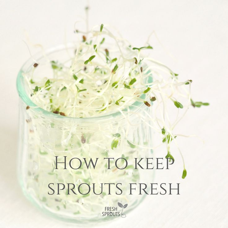 Find the tips to keep your sprouts fresh for long on http://freshsprouts.dk/shelf-life #sprouts #sprouting #greenshelflife