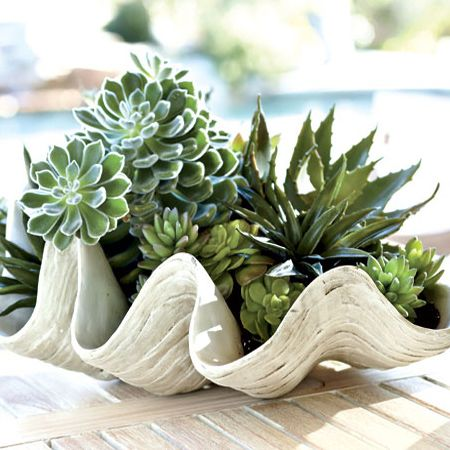 seashell plant holder container