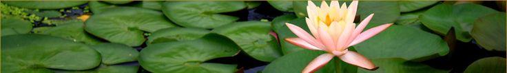 VIETNAM & CAMBODIA: 2013: AmaWaterways.com