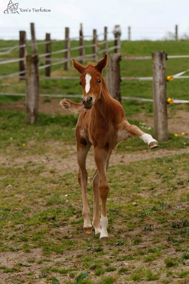 We think this foal might just want to be a dressage horse when he grows up!! @equestrianperformance