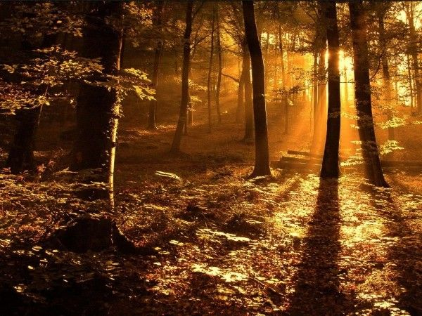 In het Speulder- en Sprielderbos, een van de oudste bossen in ons land tussen Ermelo en Garderen, ligt m'n jeugd en m'n liefde. Bijna 50 jaar geleden met mijn Oma achter op de fiets bosbessen plukken, als 'drijver' op jacht met m'n Opa.  De eindeloze verkenningstochten, op zoek naar wild. Het 'bos met de dansende bomen, is door de leden van Staatsbosbeheer gekozen tot het 'mooiste bos van Nederland'.