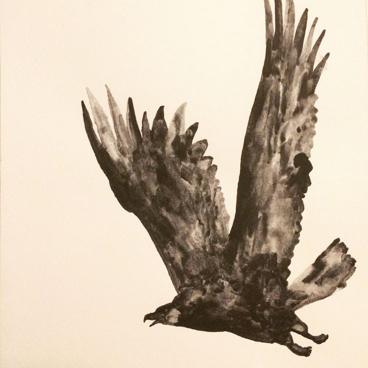 Eagle flying - Made with graphite