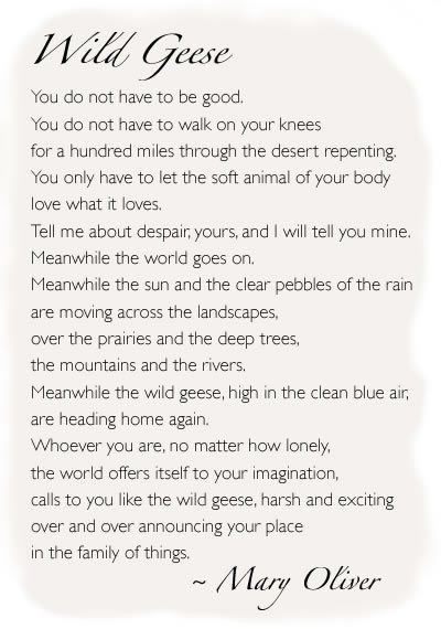 Wild Geese - I love this poem. I heard it during a convention speech and have been looking for it since then.
