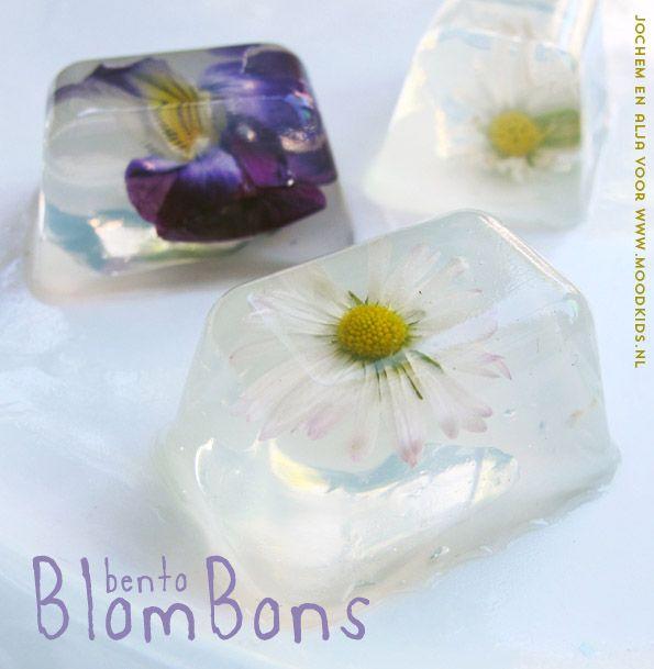 madeliefjes eten, blombons bento eetbare bloemen
