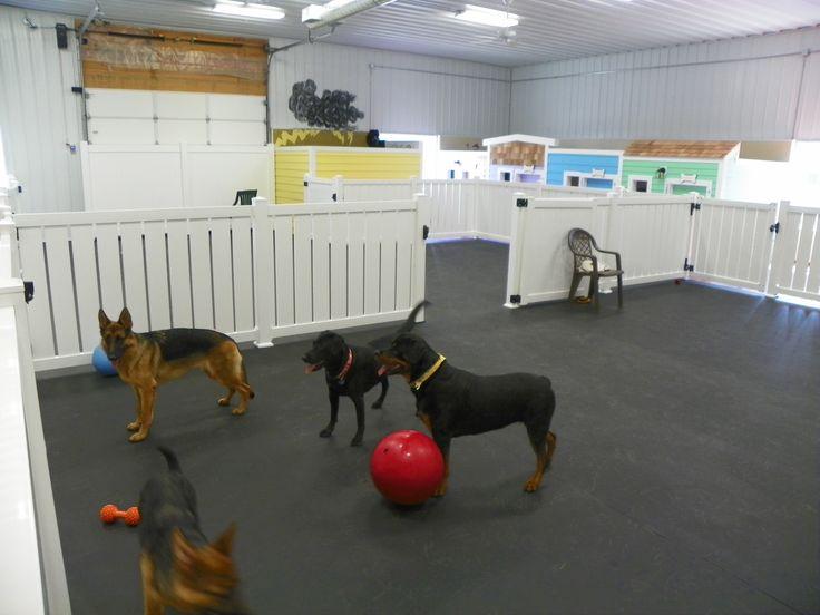 102_0021.jpg 4,288×3,216 pixels Dog daycare, Dog
