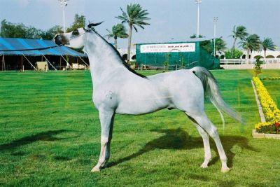 Arap Atları