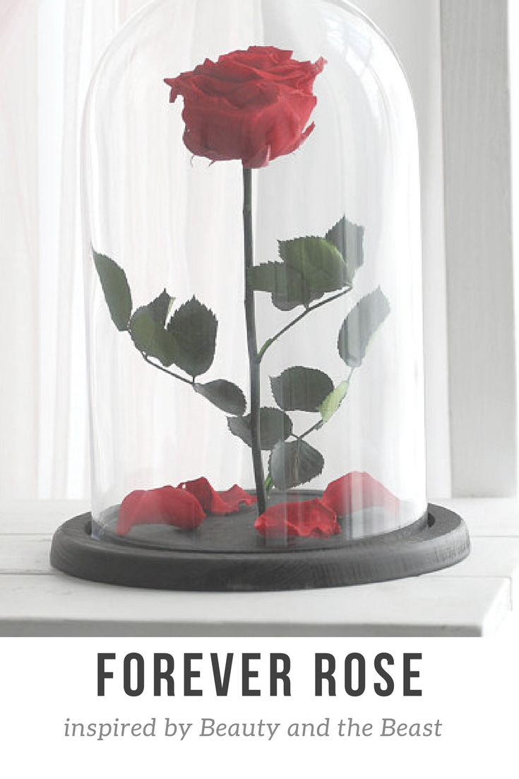 Forever Rose, a preserved rose inspired by Beauty and the Beast.