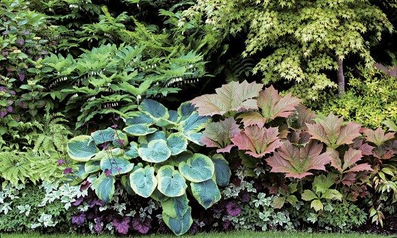 Find out how you can add texture and color to garden borders without the help of flowers.