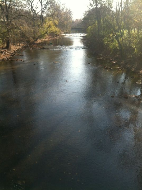Red Cedar River (MSU) in East Lansing, MI On MSU campus between Brody and the Sparty Bridge on the north bank of the Red Cedar fishing is allowed. The stocking of steelhead in 2013 might provide good future fishing opportunities as well. http://www.mlive.com/lansing-news/index.ssf/2013/04/el_fishing_notes.html Species: small mouth bass, bowfin, and suckers. In the fall Coho and Chinook salmon can be spotted in lower number. Baits: spinners, Hot-n Tots, spawn sacks, and natural baits.
