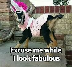 Image result for baby goat funny
