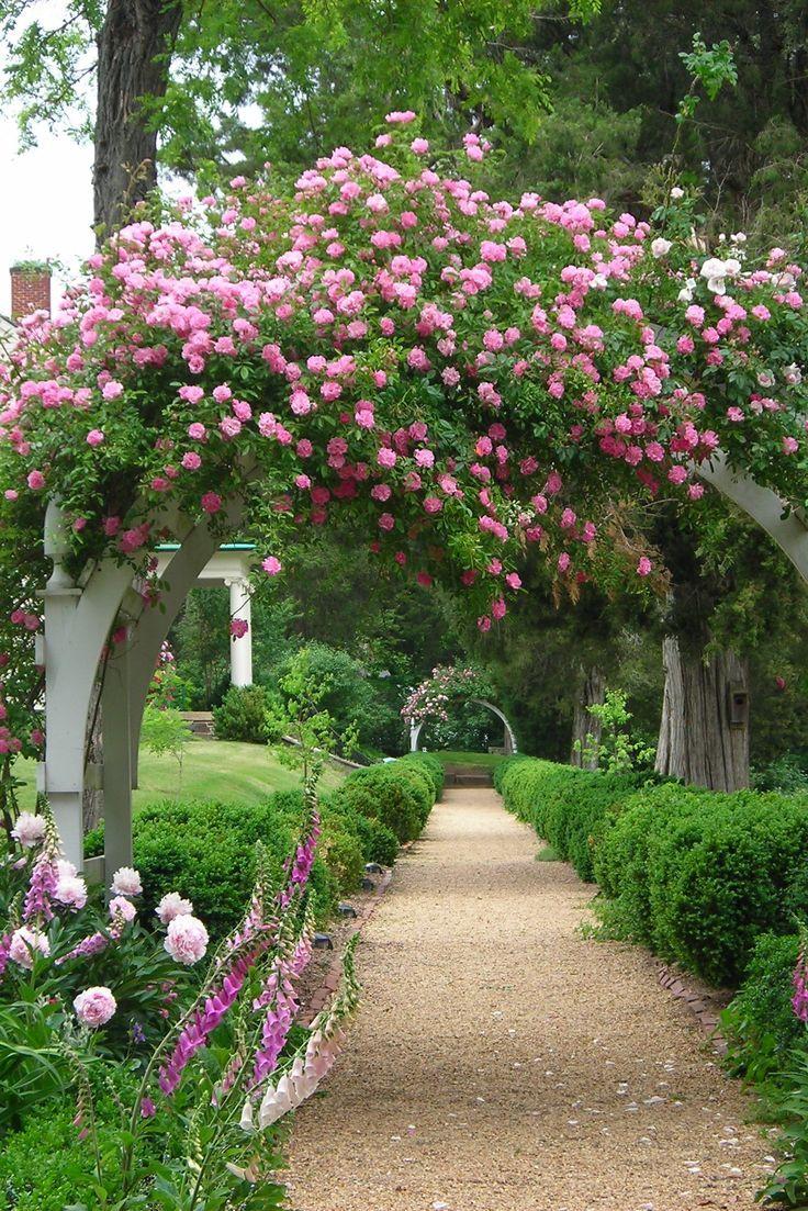 【诗联笑画】(977)【玫瑰花园】《Beautiful Flower Arch Garden 美麗的花拱花园》by J