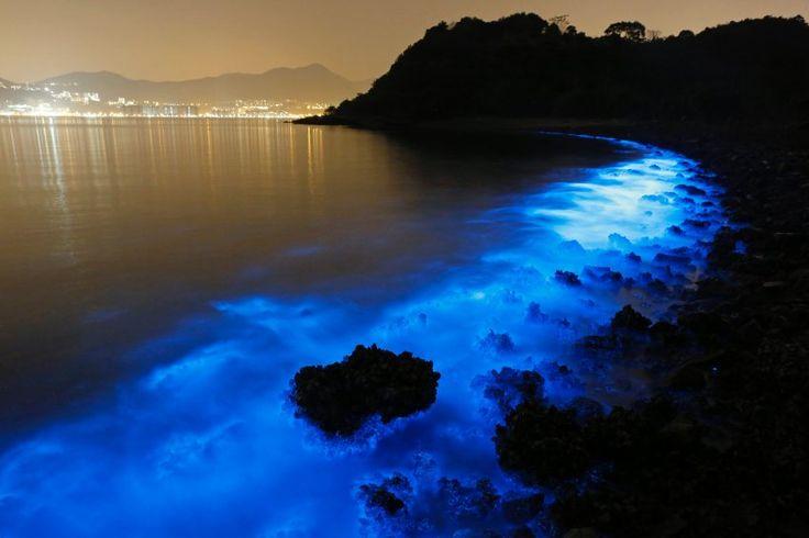 Meeresleuchttierchen Vor der Küste Hongkongs.. Die bis zu zwei Millimeter großen Einzeller sind zur Biolumineszenz fähig. Mit ausreichender Belichtungszeit fangen Fotografen es bei Nacht ein. SPIEGEL ONLINE