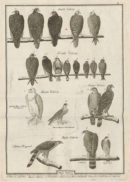 Observations sur le vol des oiseaux de proie, Jean Huber, 1784