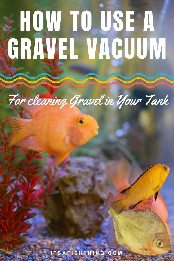 How To Use A Gravel Vacuum To Clean Your Fish Tank Or Aquarium