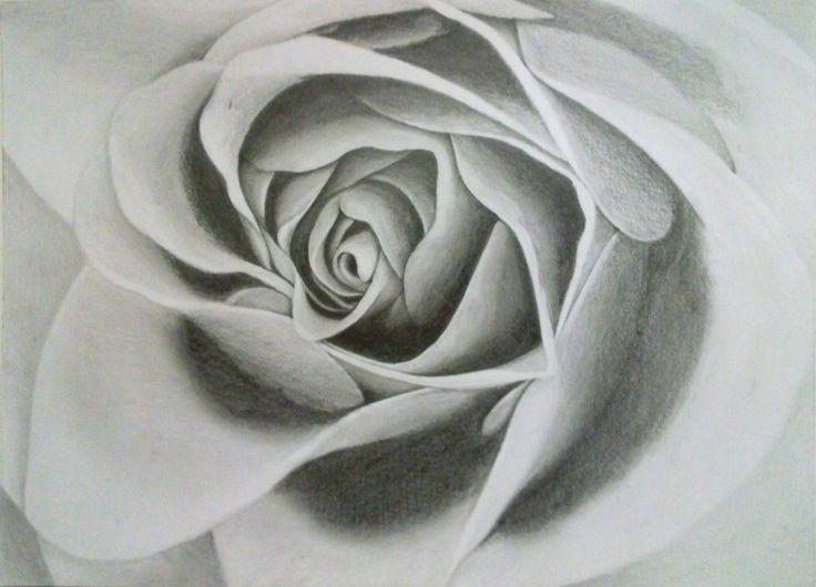 Drawing of a Rose by VisualArt93.deviantart.com on @deviantART