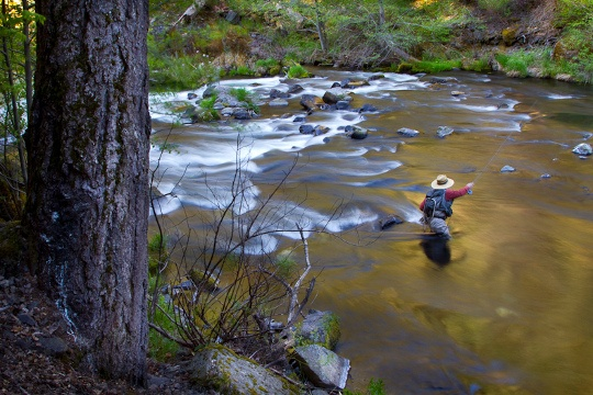 10 best mccloud river california images on pinterest for Fly fishing northern california
