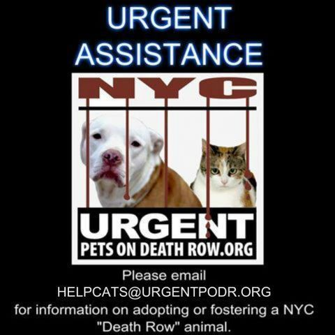 URGENT CAT HELP DESK - - Info  **PLEASE NOTE OUR NEW HELP DESK EMAIL ADDRESS** Help us keep our cats safe, and keep our threads open to public comment, by encouraging interested parties to reach out to helpcats@urgentpodr.org Please click the HELP DESK BUTTON  and email the Help Desk volunteers. **If possible, please include a link to the cat's picture in your email.** Our dedicated, approved help desk crew will do their best to guide potential foster/adopters through the