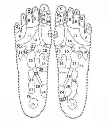 Points d'acupuncture pied
