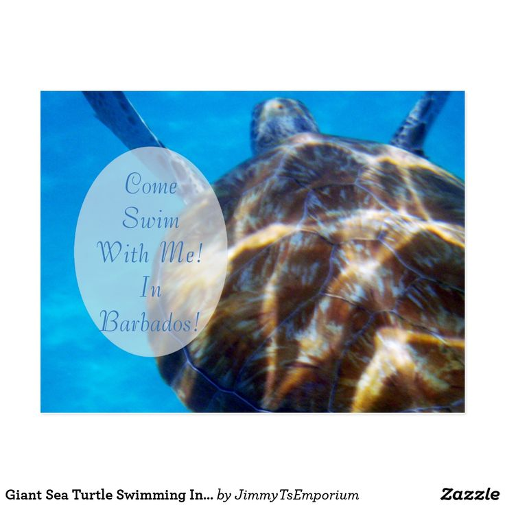 25 best ideas about giant sea turtle on pinterest big
