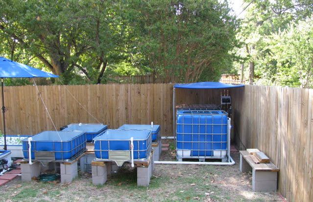 Do It Yourself Home Design: Best First Aquaponic System