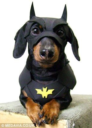 Crusoe the Dachshund becomes internet celebrity with his wacky outfits | Mail Online