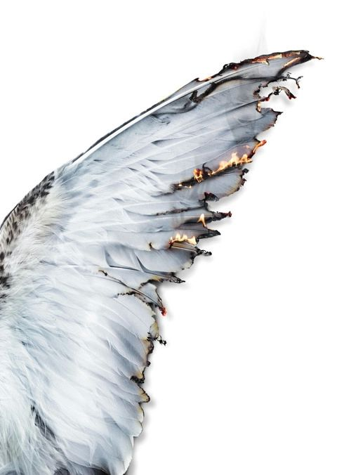 Image de angel, wings, and fire