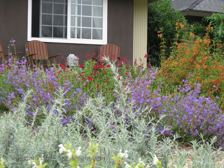 Ca Natives Love The Lion 39 S Tale Tall Orange Plant In Back Replace Your Lawn Pinterest