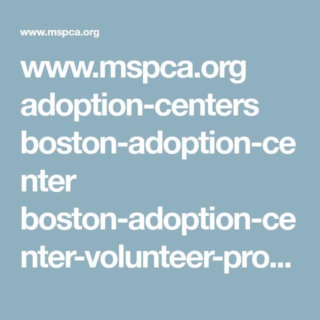www.mspca.org adoption-centers boston-adoption-center boston-adoption-center-volunteer-program