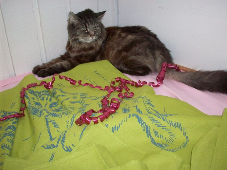 Simba vilar bredvid den fräsha limefärgade kökshandduken med han själv som motiv. 89 kr/st på www.katt4you.se