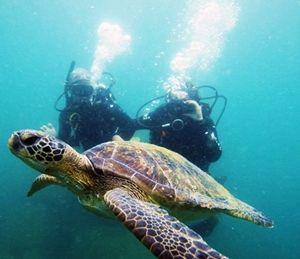 Mergulho em Bombinhas