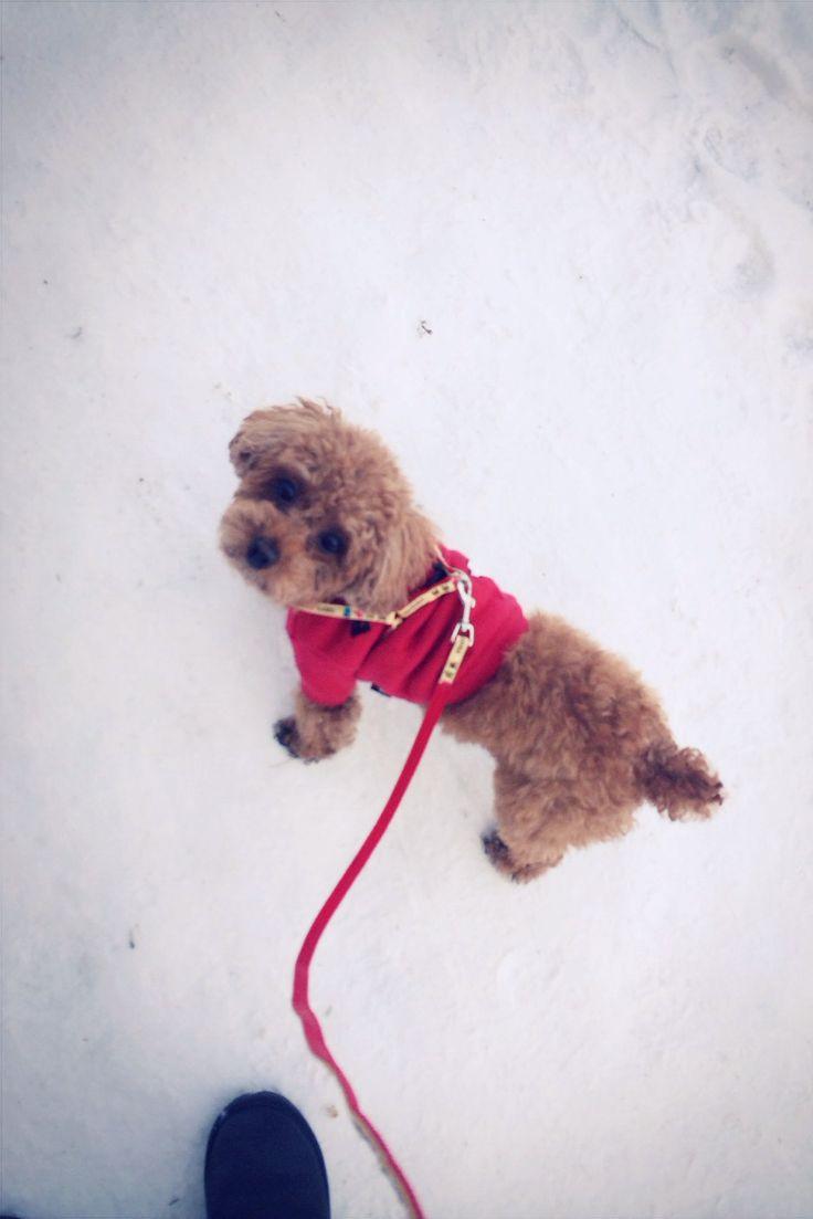 Snow choco