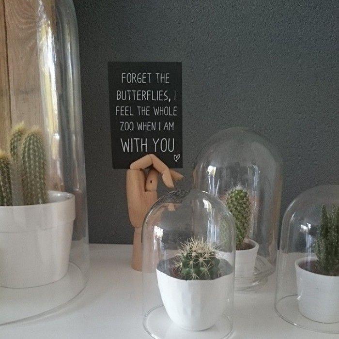 Cactussen onder een stolp; leuke quote; kleur op de muur [instagram van fredkroneman].