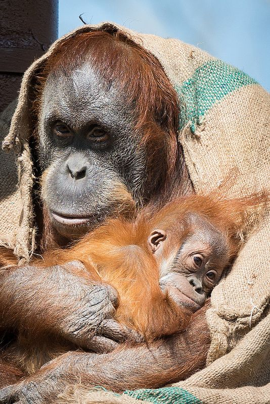 Jantho with (Mum) Anette @ Durrell Wilflife Conservation Trust | by charlie-jsy